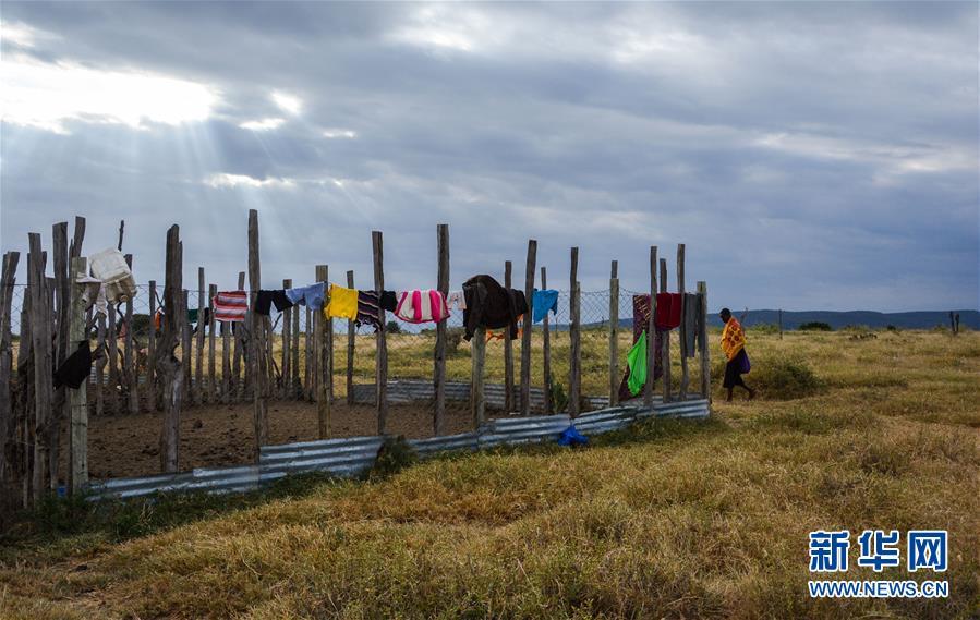 (国际・中非合作论坛・图文互动)(15)与狮同行――东非草原上的中国追梦人