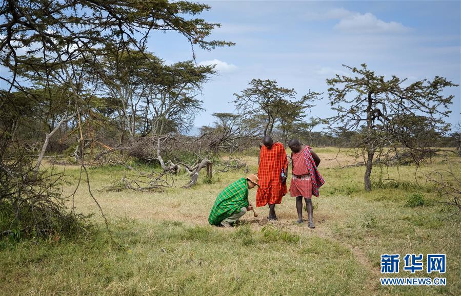 (国际・中非合作论坛・图文互动)(10)与狮同行――东非草原上的中国追梦人