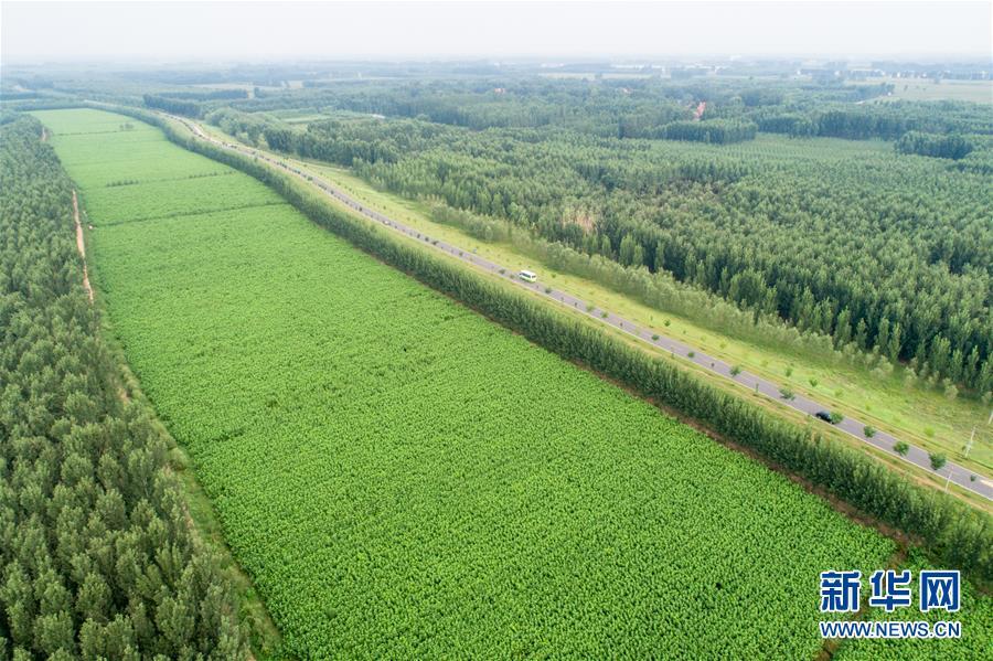 #(经济)(1)绿色乡村路 美丽风景线