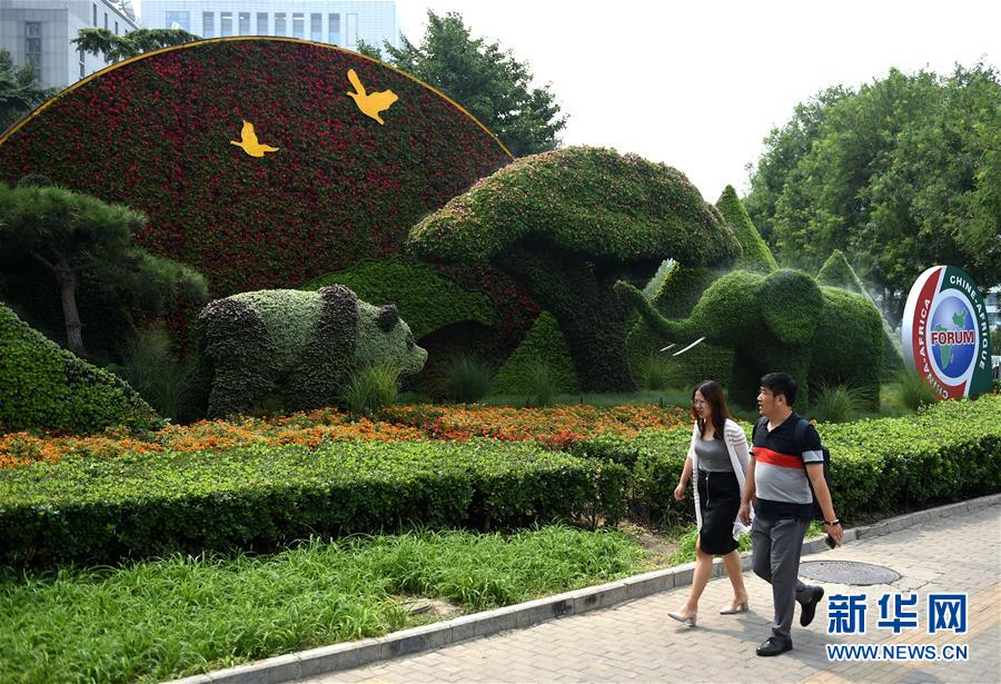 (中非合作论坛)(3)北京街头靓丽花坛迎盛会