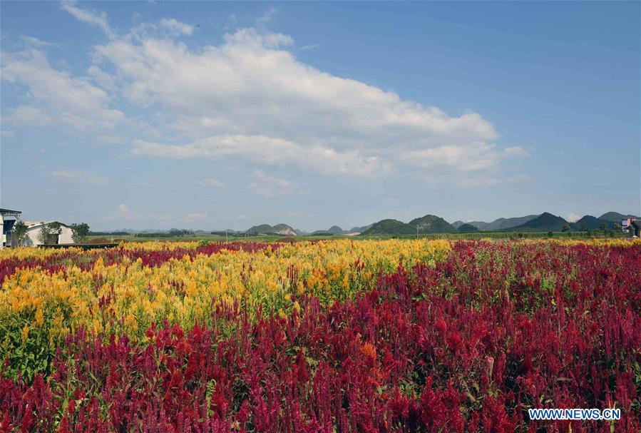 CHINA-YUNNAN-LUOPING-COLORFUL FLOWER FIELDS (CN)