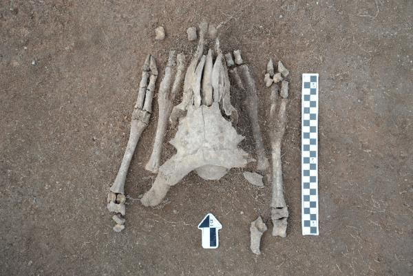 中蒙联合考古队发现疑似匈奴统治中心遗址