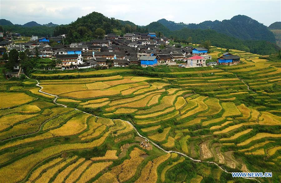 #CHINA-AUTUMN-PADDY FIELDS (CN)