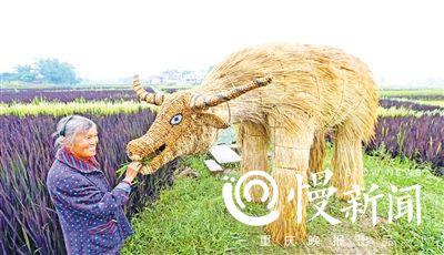 重庆多彩稻谷打造大型观赏田 已到观赏时节