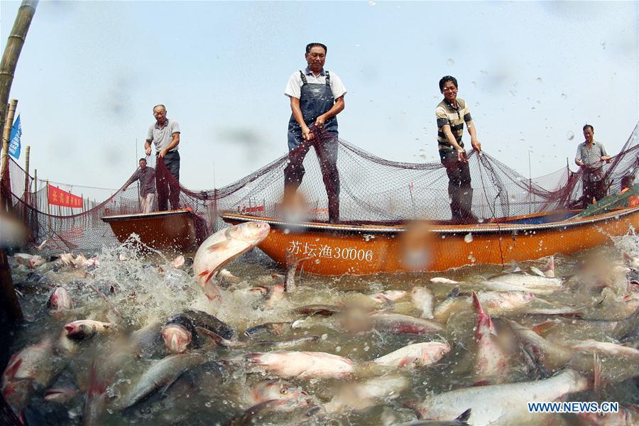 #CHINA-JIANGSU-CHANGDANG LAKE-FISHING (CN)