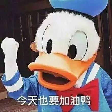 Quack! Quack! How did ducks become a social media favorite?