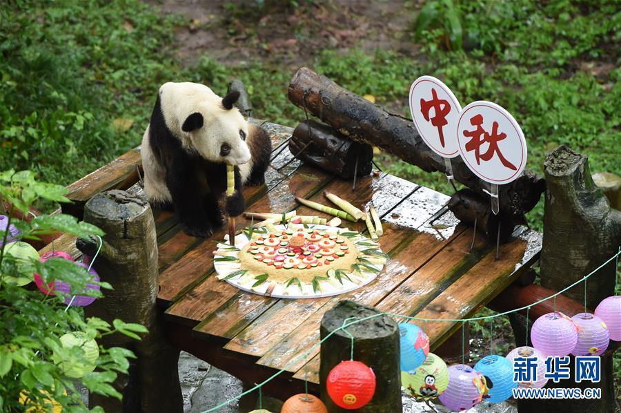 (社会)(1)重庆:手工月饼送给大熊猫