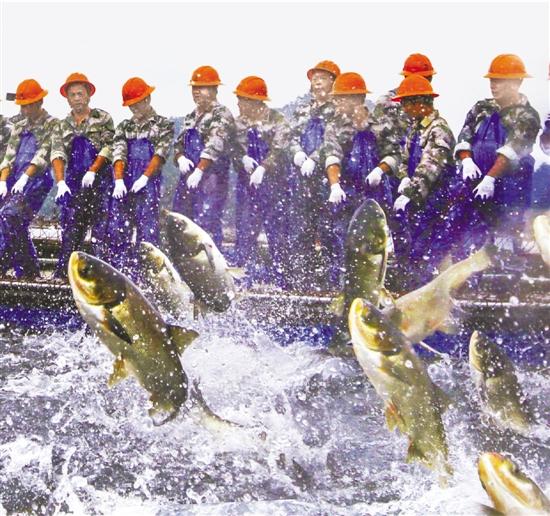 博天堂线上娱乐场一网16万斤千岛湖鱼跃庆丰收