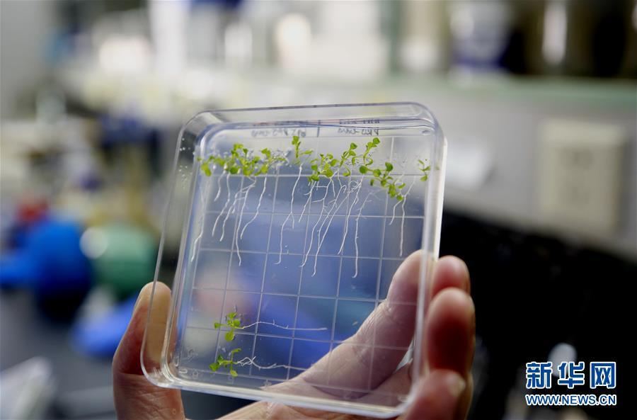 (图文互动)(1)在太空种粮?#26893;?#24320;花结果 我国首次在天宫二号完成植物生长全过程实验