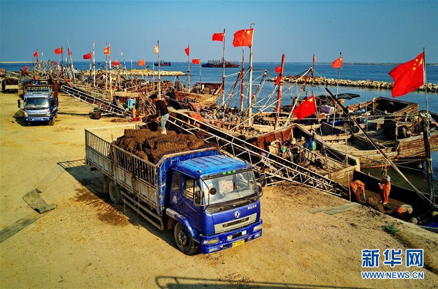 (经济)(3)河北昌黎:可持续扇贝养殖助环保渔业双赢