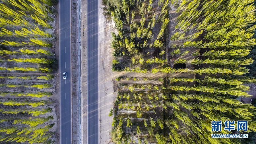 """接力三十载 荒漠变""""林海""""——新疆柯柯牙的""""绿色涅槃"""
