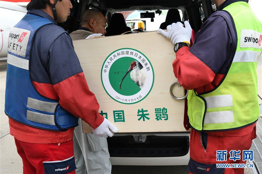 (国际)(1)中国提供的一对朱鹮抵达日本佐渡朱鹮保护中心