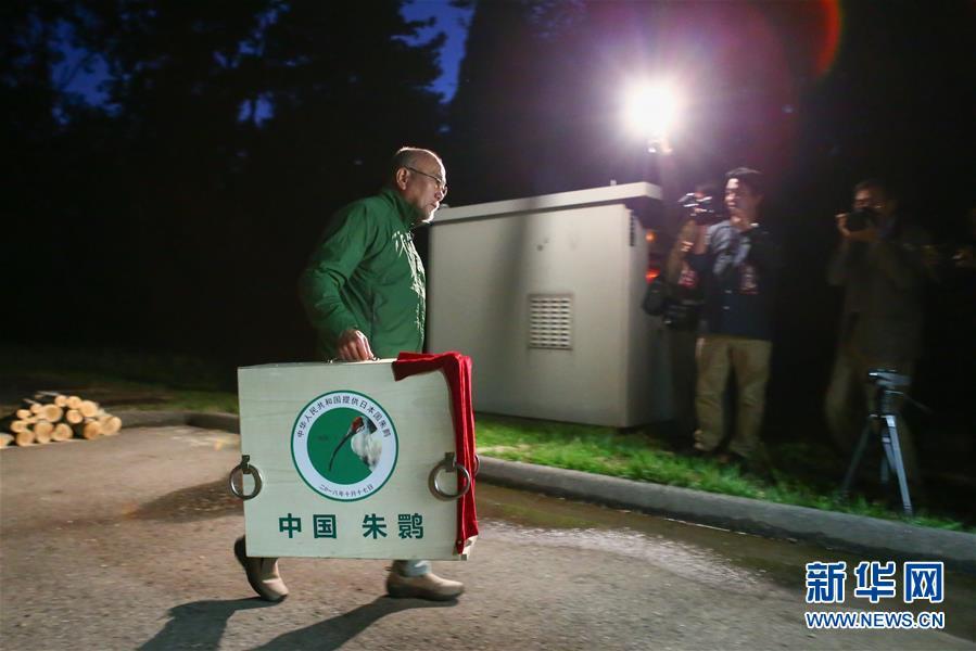 (国际)(3)中国提供的一对朱鹮抵达日本佐渡朱鹮保护中心