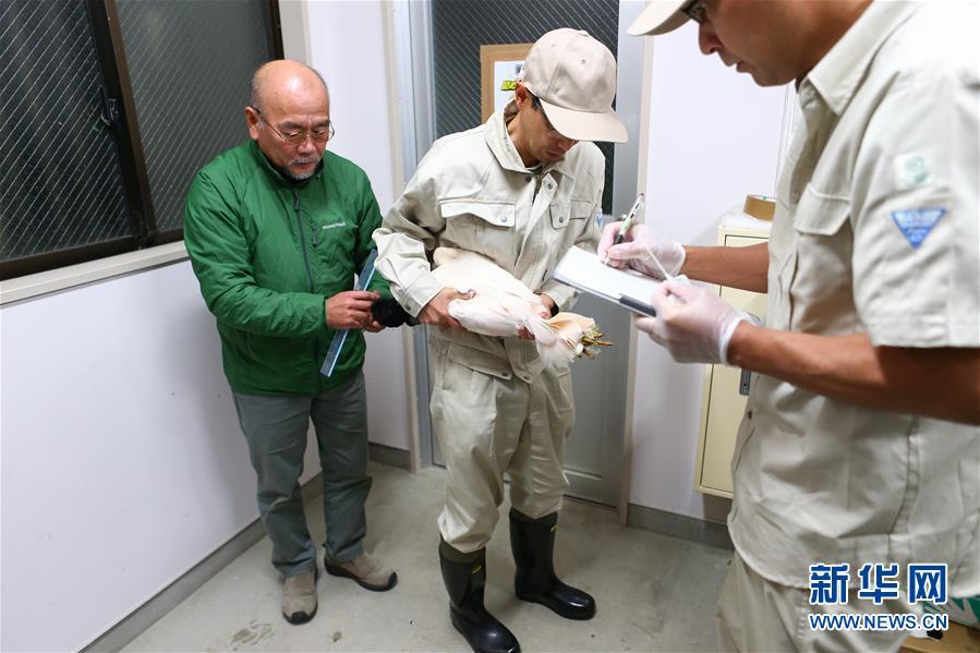 (国际)(6)中国提供的一对朱鹮抵达日本佐渡朱鹮保护中心