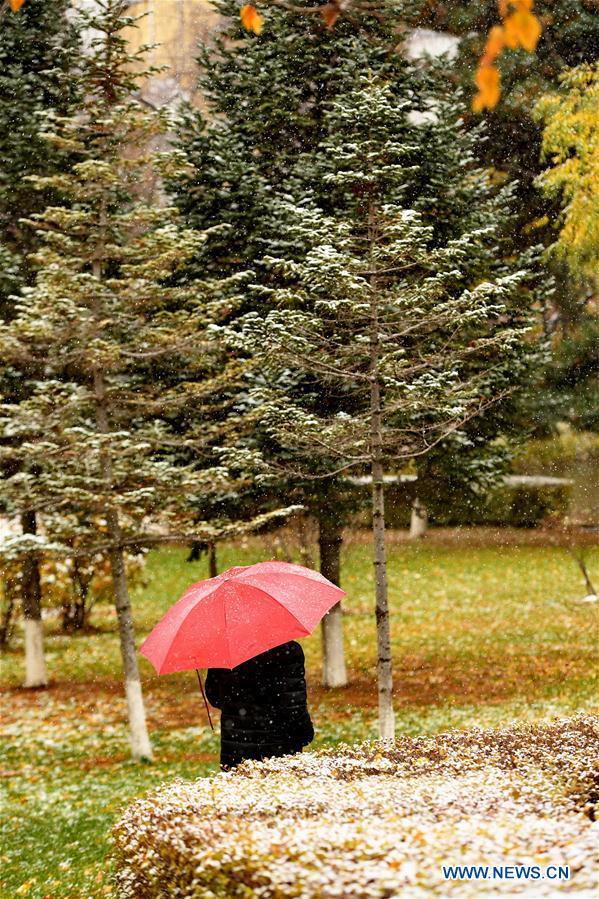 Snow falls in Changchun, NE China's Jilin