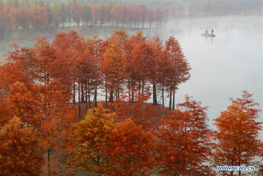 Scenery of redwood forest in E China's Jiangsu