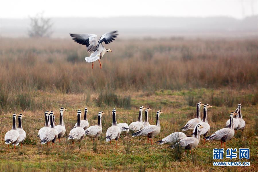 #(环境)(1)贵州草海陆续迎来越冬候鸟