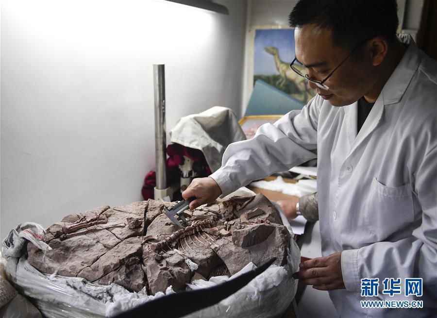 (科技)(5)吉林大学科研团队发现恐龙牙釉质波纹构造的最早记录