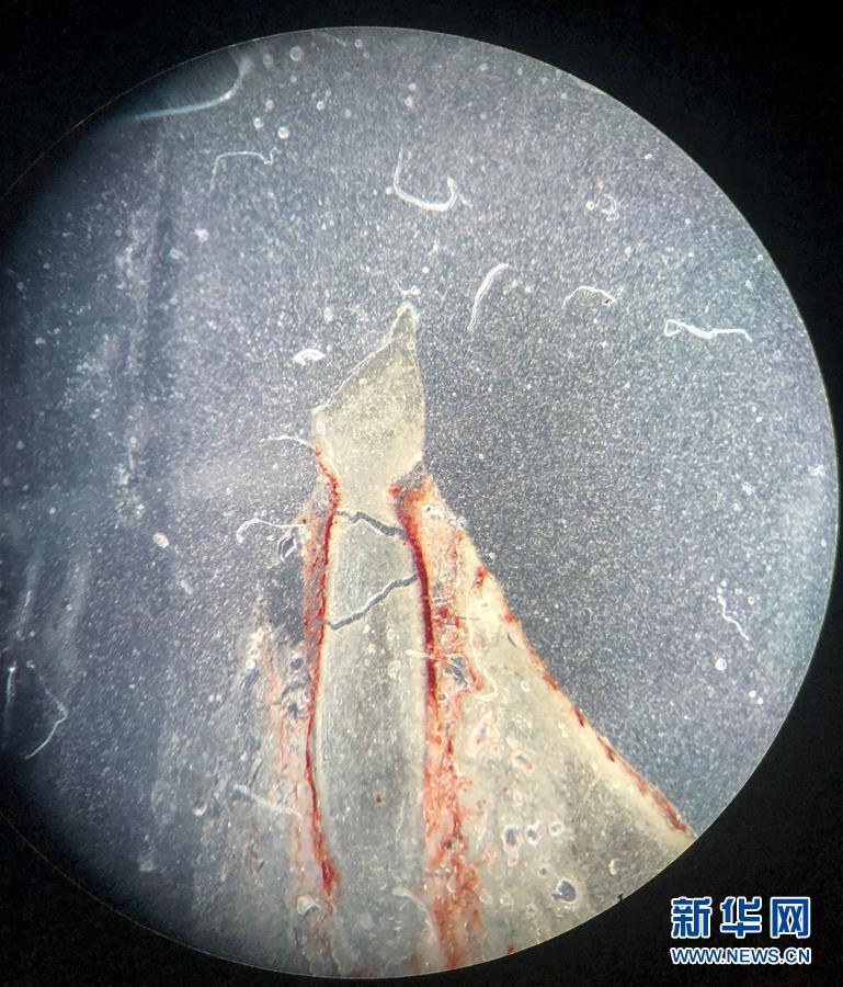 (科技)(2)吉林大学科研团队发现恐龙牙釉质波纹构造的最早记录
