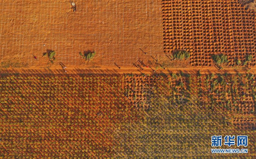 (社会)(1)河北迁安:废弃矿山复绿复垦展新颜