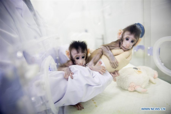 Two cloned macaques named Zhong Zhong and Hua Hua are held by a nurse at the non-human-primate research facility under the Chinese Academy of Sciences (CAS) in Suzhou, east China's Jiangsu province, Jan. 22, 2018. [Photo: Xinhua/Jin Liwang]