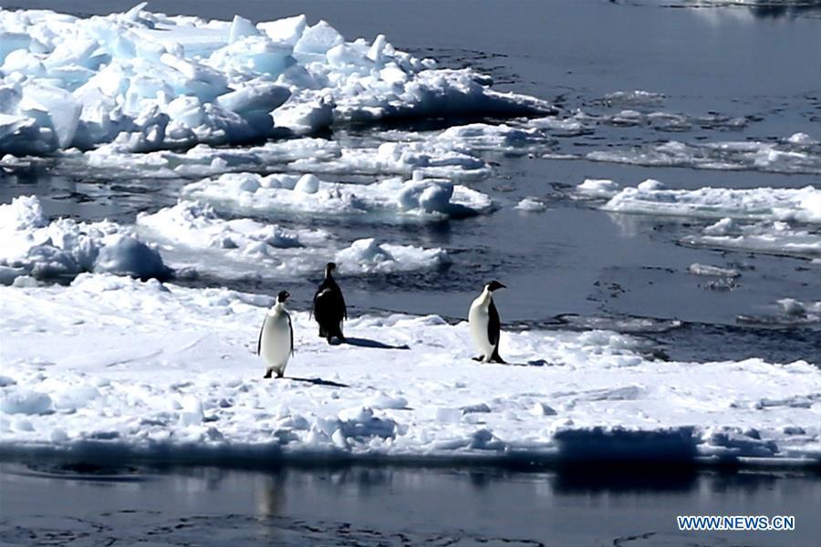 China's research icebreaker Xuelong enters Antarctic Circle