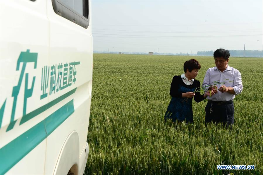 Xinhua Headlines: Big data reshaping harvest for Chinese farmers