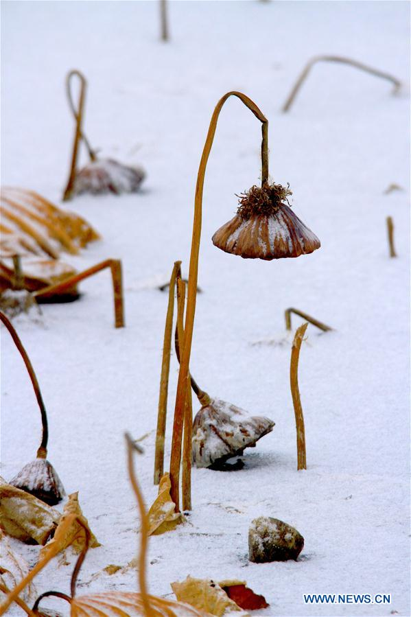 #CHINA-GANSU-ZHANGYE-WITHERED LOTUS-SNOW (CN)