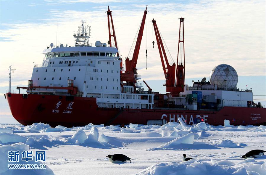 """(""""雪龙""""探南极)(1)""""雪龙""""号船边的南极企鹅"""