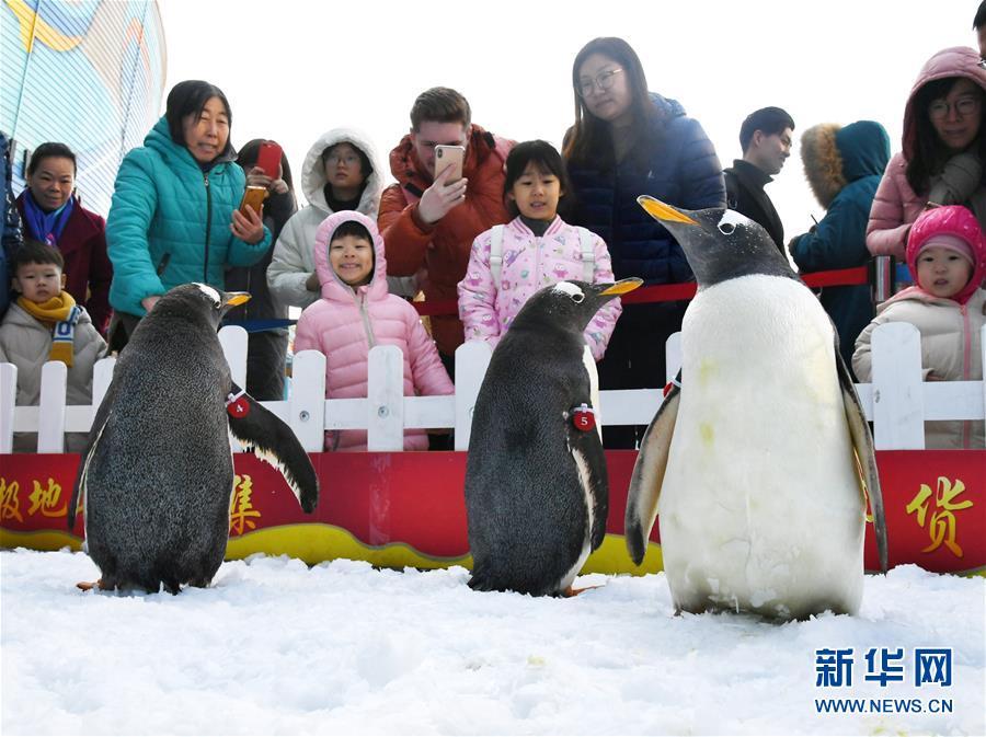 (社会)(1)与企鹅一起迎新年