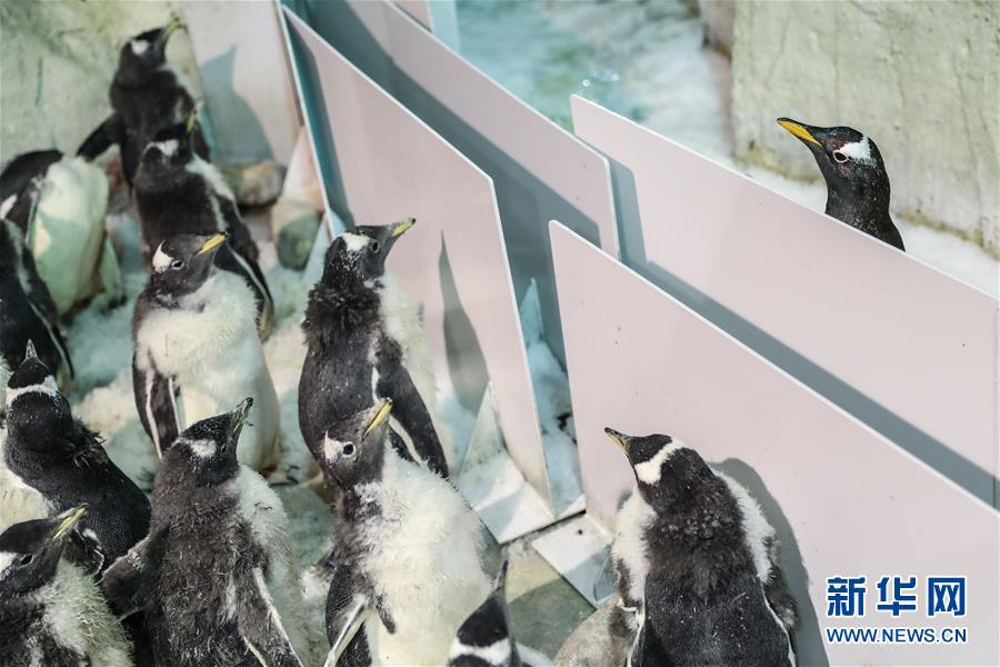 """(圖片故事)(3)小企鵝上""""幼兒園"""""""