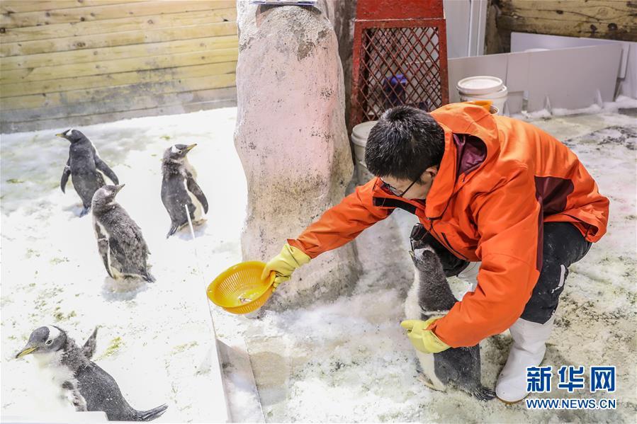 """(圖片故事)(2)小企鵝上""""幼兒園"""""""