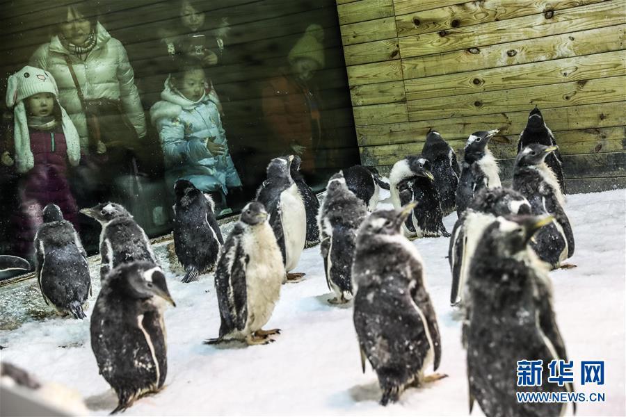 """(圖片故事)(6)小企鵝上""""幼兒園"""""""