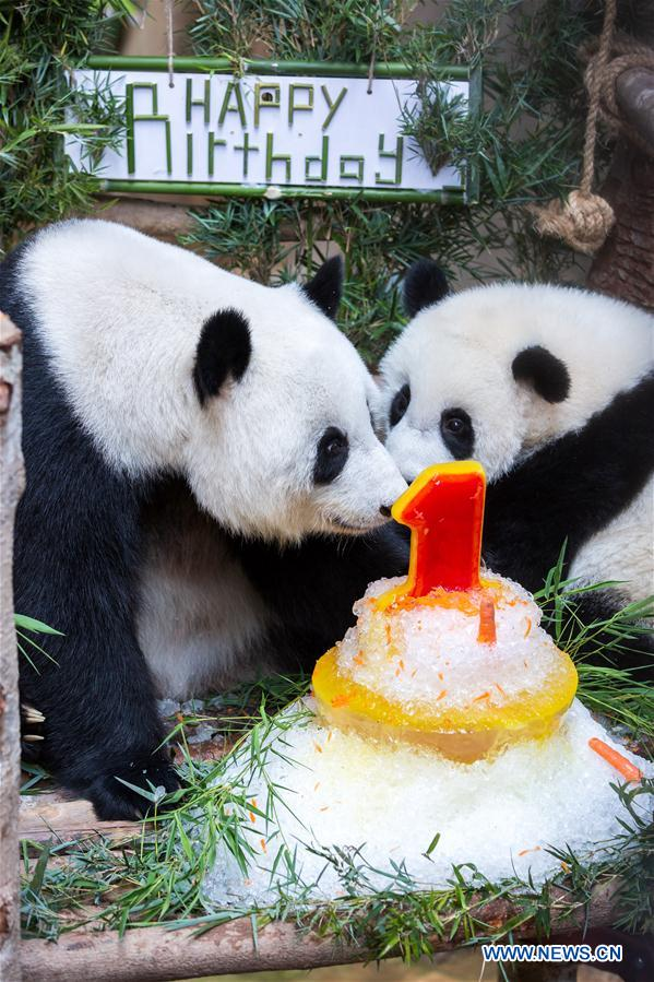 First birthday of baby giant panda celebrated in Malaysia