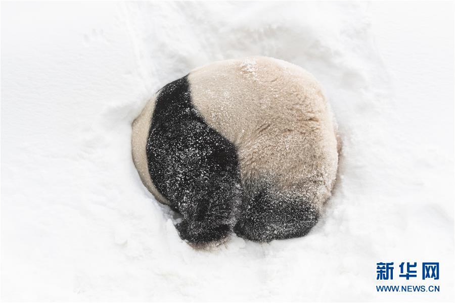 (视・觉)雪地里撒欢的新花样