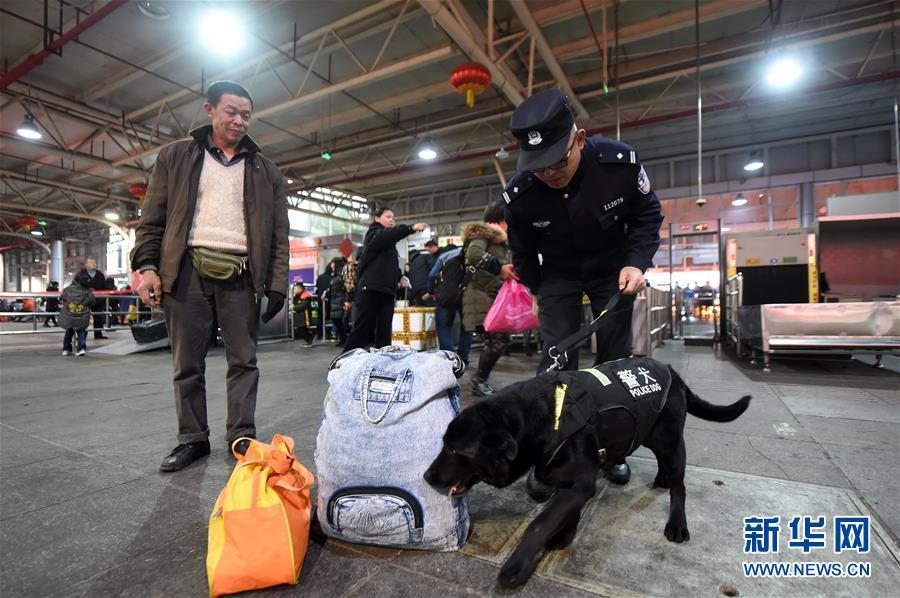 """(社会)(2)警犬""""朱蒂""""的最后一个春运"""