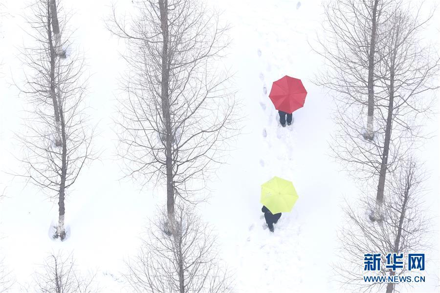 #(环境)(5)瑞雪迎春