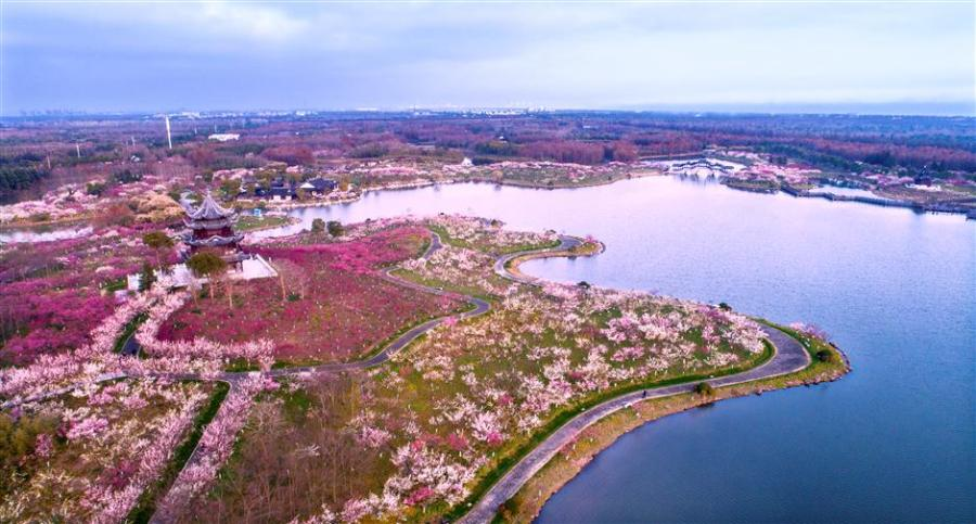 Plum blossom to greet visitors during Spring Festival