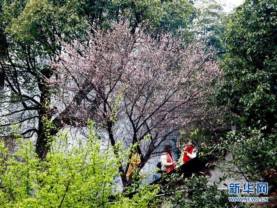 (春季美麗生態)(4)福州:古寺梅香