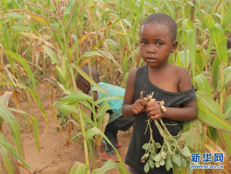 (国际)(1)津巴布韦预计今年逾700万人将面临粮食短缺