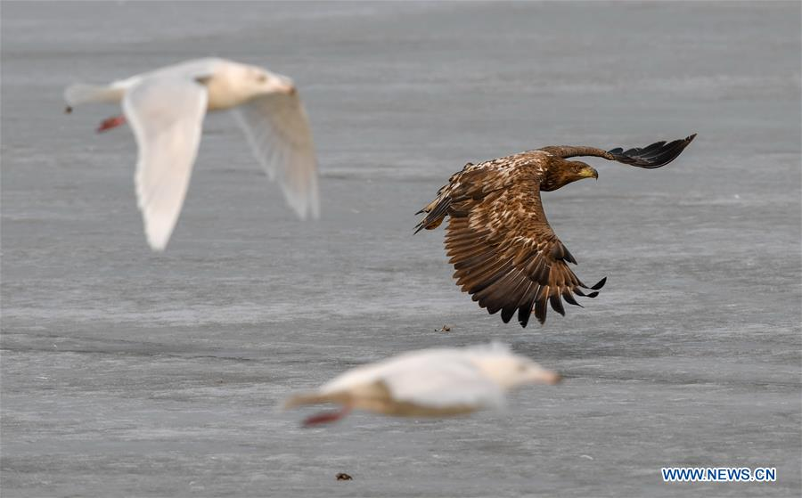 In pics: Jingxin Wetland, temporary home to migratory birds in early spring in China's Jilin