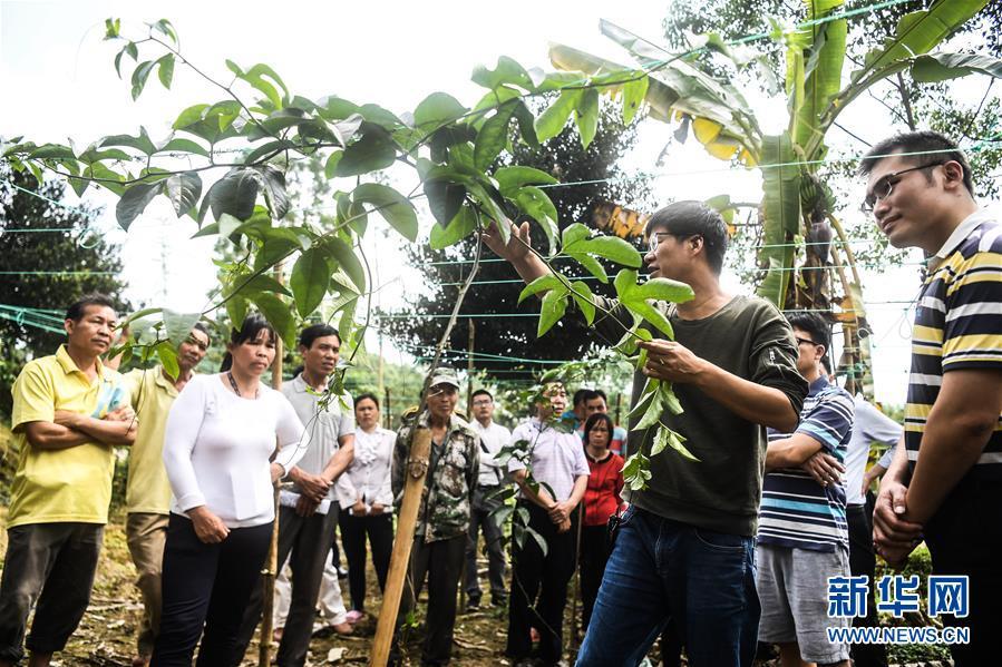(社会)(1)钦州:种植技能培训助脱贫