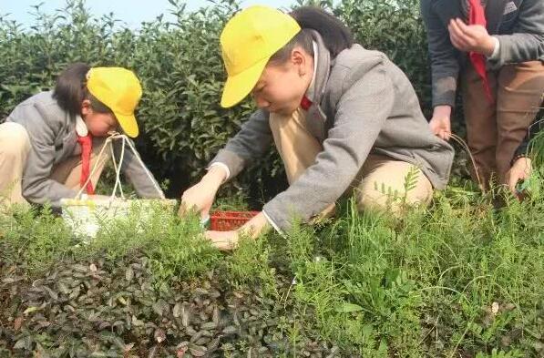 来这里读懂春天:杭州富阳举办春分节气文化传承活动