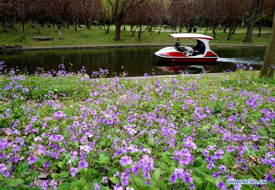 City forest flower exhibition held in Shanghai