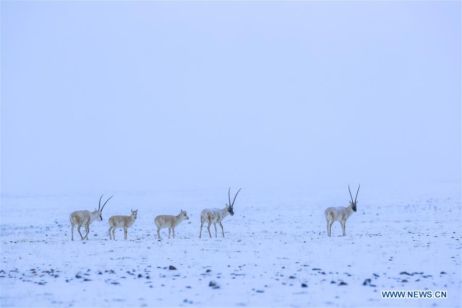 Xinjiang nature reserve sees increasing number of rare animals