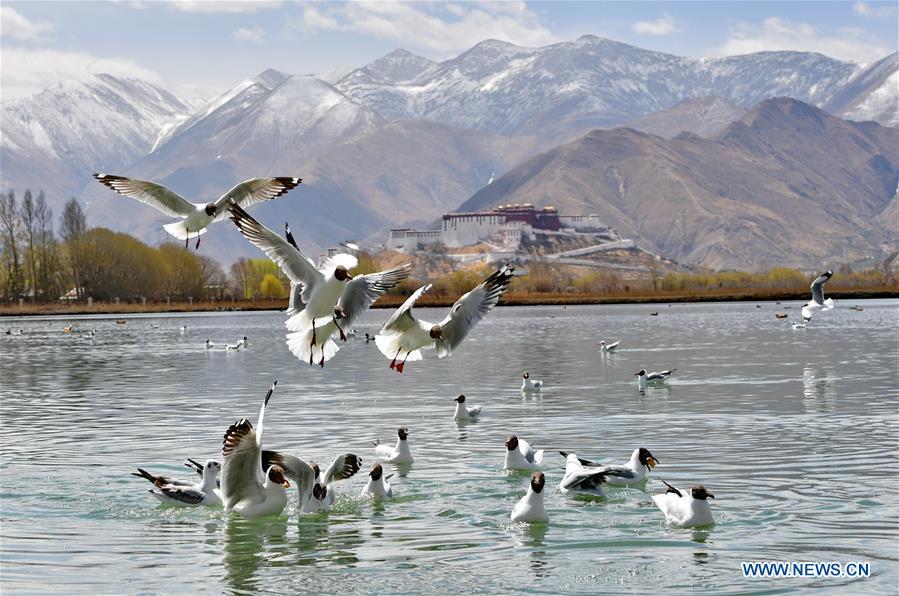 CHINA-TIBET-LHASA-WETLAND-SPRING
