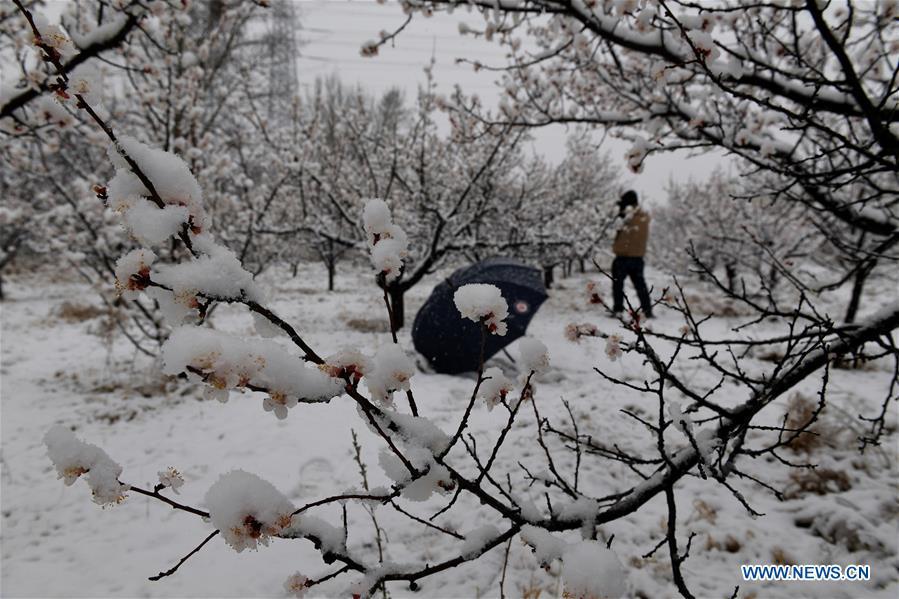 Beijing greets snow in April