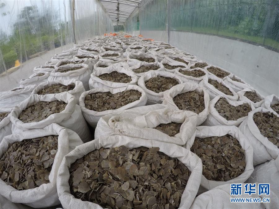 (XHDW)(3)新加坡查获近13吨穿山甲鳞片