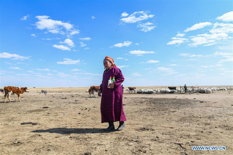 Daily life of herdswoman in China's Inner Mongolia