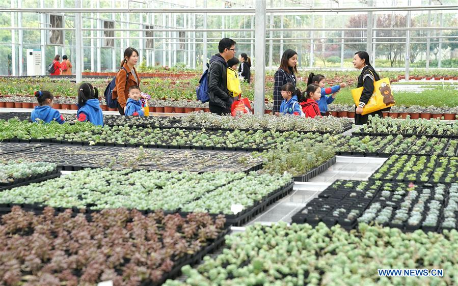 Greenhouses in Jiayu County, central China's Hubei
